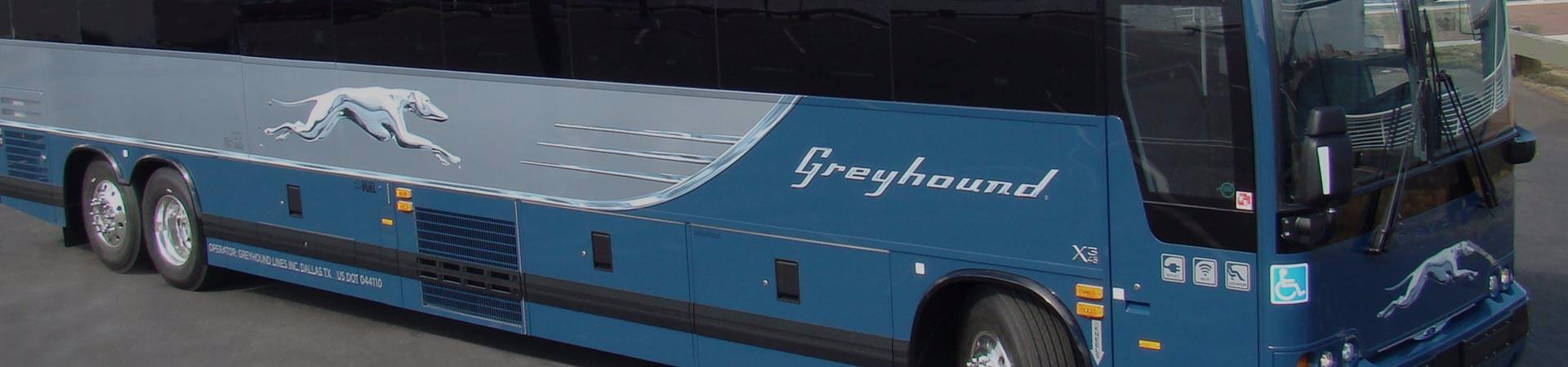 greyhound-4